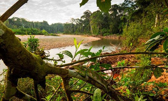 Los-humanos-han-deteriorado-un-tercio-de-las-areas-protegidas-del-mundo
