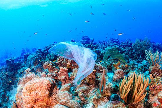 Los bioplásticos no solucionan la contaminación por plásticos